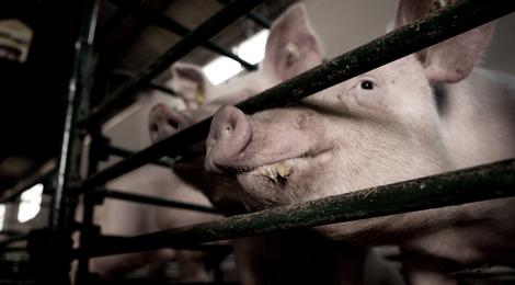 Tierschutz in Europa: Strenge Richtlinien, mangelhafte Umsetzung?